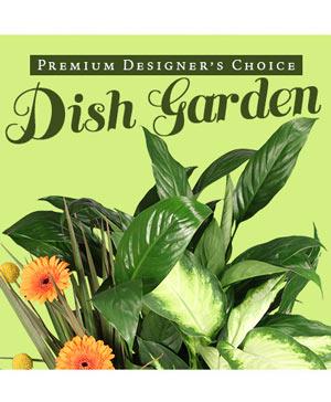 Lush Dish Garden Premium Designer's Choice in Cincinnati, OH | Reading Floral Boutique