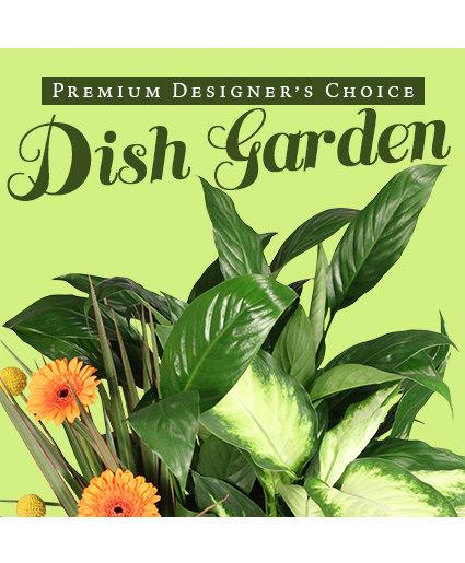 Lush Dish Garden Premium Designer's Choice