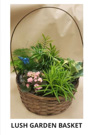 Lush garden basket  Mixed plants