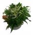 Lush Garden Ceramic Planter