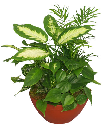 lush garden of green plants - Garden Gypsum