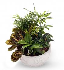 Lush Garden of Green Plants  Garden Basket