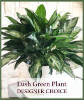 Lush Green Plant Designer Choice
