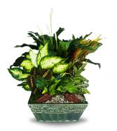 Lush Lavish Ceramic Dish Garden