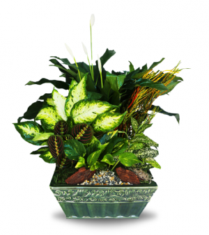 Lush Lavish Ceramic Dish Garden  in Sunrise, FL | FLORIST24HRS.COM
