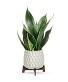 Lush Leaves Pothos Plant plant