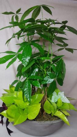 lush verde planter corporate planter