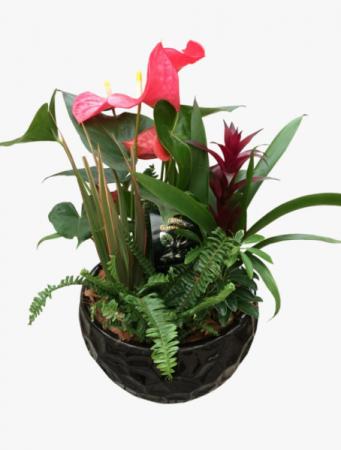 Luxurious anthurium  Tropical dish garden