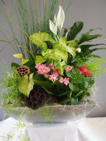 Luxurious Dish Garden Flowering and Green Plants