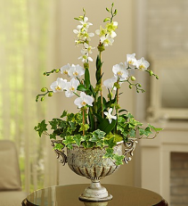 Luxurious Orchid Garden FROM ROMA FLORIST