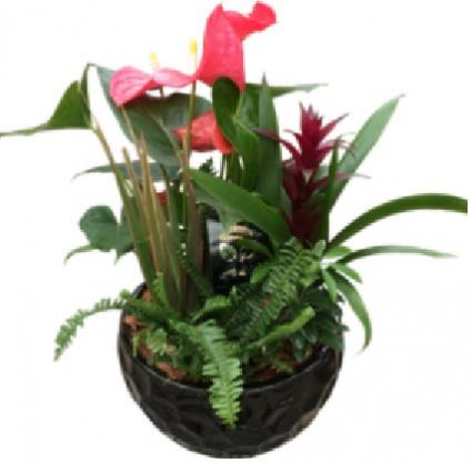 Luxury Mix 1 plant