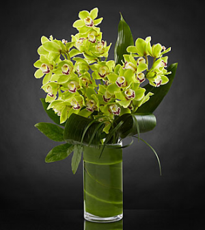 Luxury Orchids Vase Arrangement in Sunrise, FL | FLORIST24HRS.COM