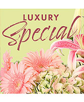 Luxury Special Designer's Choice
