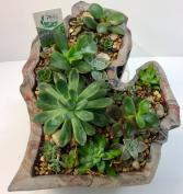 Made in Michigan Succulent Planter Planted or Unplanted