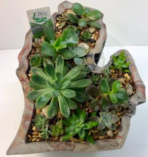 Made in Michigan Succulent Planter  in Troy, MI | DELLA'S MAPLE LANE FLORIST