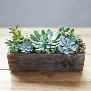 Magic Box of Succulunt