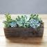 Magic Box of Succulent