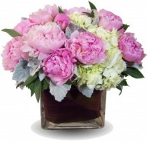 Magnificent Peonies Cut flowers