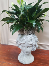 Maiden Head Planter Green Plant