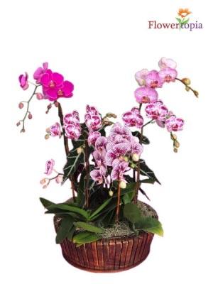 Majestic Garden Orchid  in Miami, FL | FLOWERTOPIA
