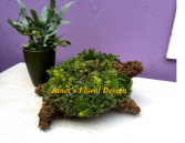 Make and Take Succulent Turtle Class Class