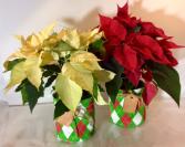 """Make It Merry"" Poinsettia"
