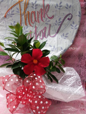 Mandevilla Blooms Administrative Assistance Day
