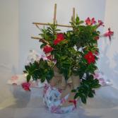 MANDEVILLA TRELLIS Outdoor Blooming Plant