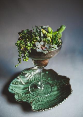 Margarita Glass Succulent Garden  Succulent Garden