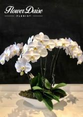 Marjorie Plants