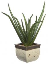 Mature Aloe Vera Plant Planter