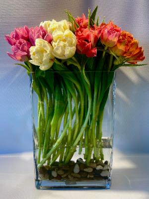Meadow of Tulips  in Falls Church, VA | Geno's Flowers