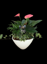 Medium Anthurium Planter Garden
