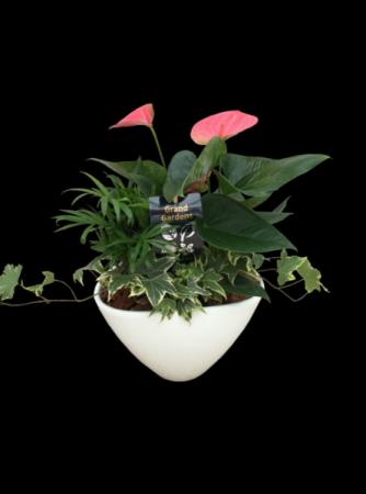 Medium Anthurium Planter Garden