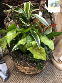 Medium Basket Dishgarden Planter