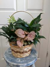 Medium Basket Garden  Planter