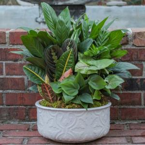 Medium Ceramic Dish Garden Plant in Biloxi, MS | Rose's Florist