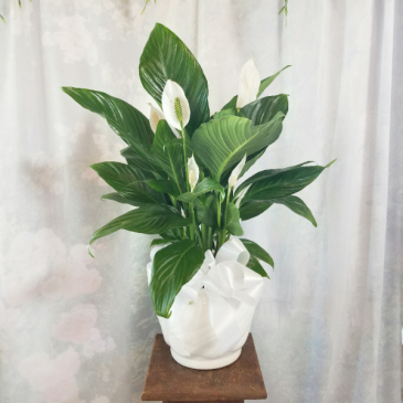 Medium Comfort Planter Plants