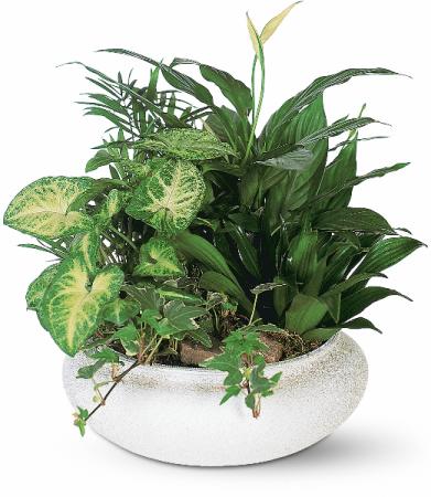 Medium Dish Garden Green Plant
