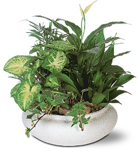 Medium Dish Garden Mixed Plant Arrangement