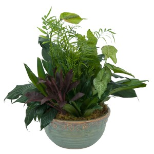 Medium Dish Garden Plant in Naugatuck, CT | TERRI'S FLOWER SHOP