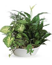 Medium Dish Garden Plant