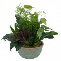 Medium Dish Garden Plant Arrangement