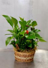 Medium Green Mixed Plants Plants
