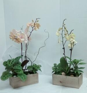 Medium Orchid Garden  in Tottenham, ON | TOTTENHAM FLOWERS & GIFTS