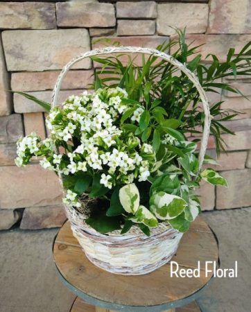 Medium Plant & Blooming Basket