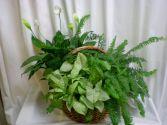 Medium Garden Plants