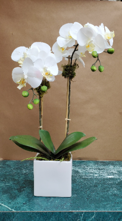 Medium White Orchid Arrangement  in New York, NY | PANY SILK FLOWERS