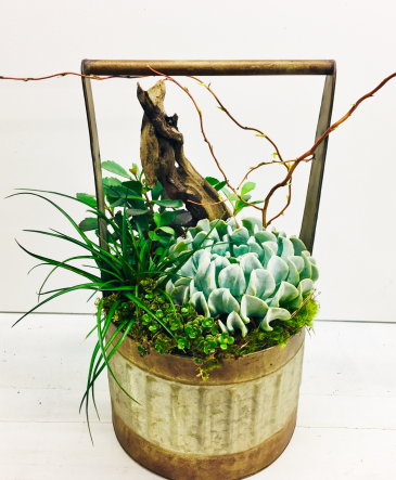 Metal Basket with Succulents