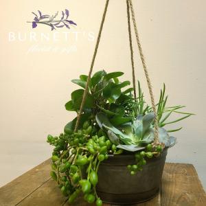 Metal Hanging Succulent  Planter in Kelowna, BC | Burnett's Florist